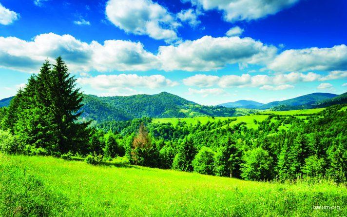 Зеленые поля и деревья Лафеюм